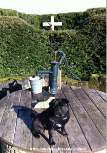 Breca the Pug and the well of Adalbert.